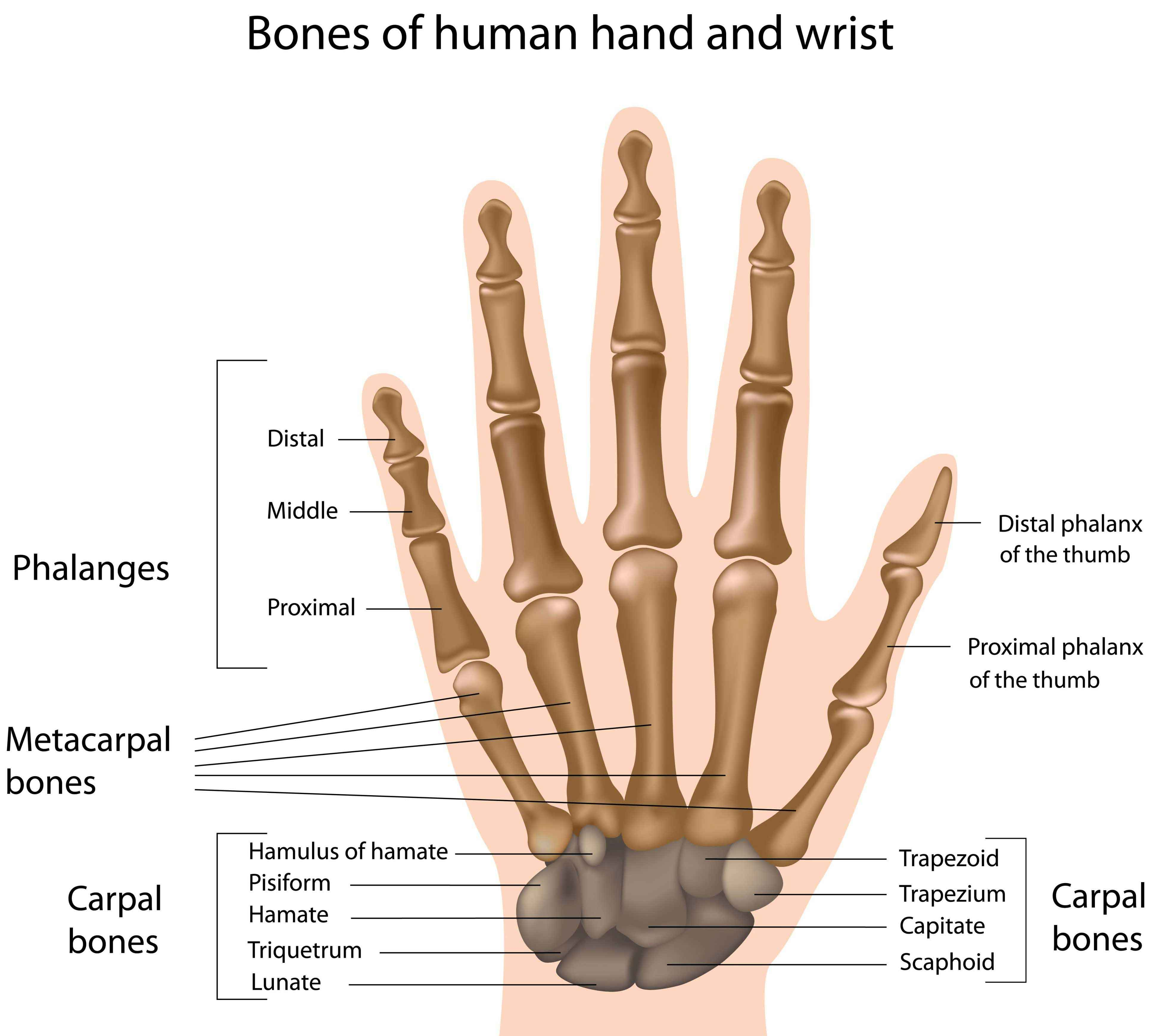 Hands And Musculoskeletal Conditions