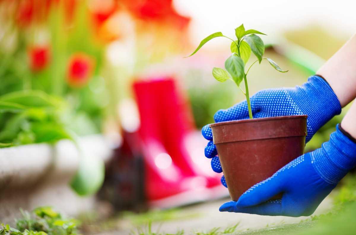 gardening-web.jpg